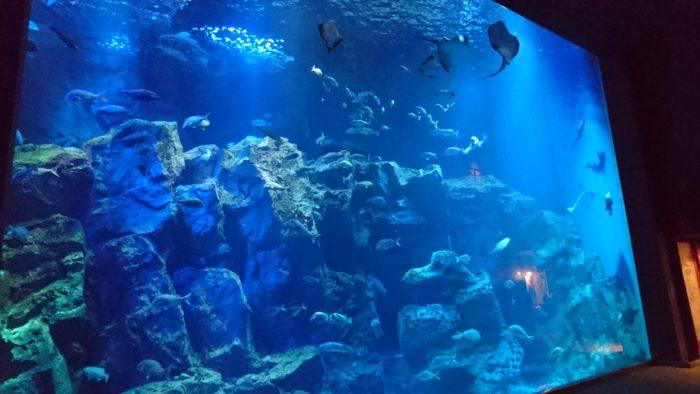 男鹿水族館GAOで一番大きな水槽。エイやカメが泳いでいます。