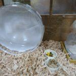 ハムスターケージ。水槽ケージ。ゴールデンハムスターの生活の様子がよく見える。