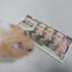 先月わずか数時間で3万円稼いだ方法